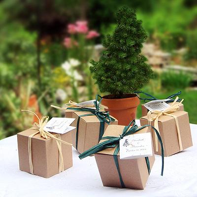 Tree Wedding Favors Tree Seed Kit Eco Favor For Weddings